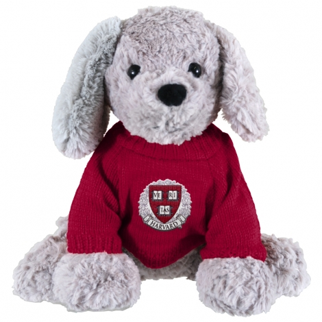 Buddy the Pup with Harvard Sweater