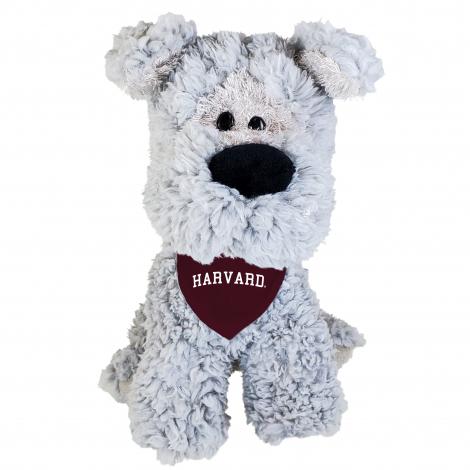 Harvard Schnauzer Puppy with Bandana